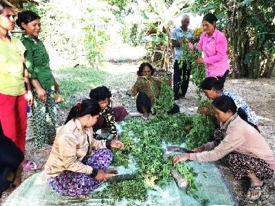 Frauen arbeiten im Garten