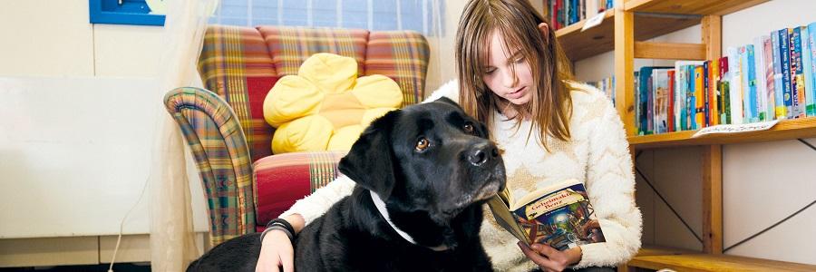 Vorlesen in entspannter Atmosphäre: Der Lesehund hört ruhig und geduldig zu.