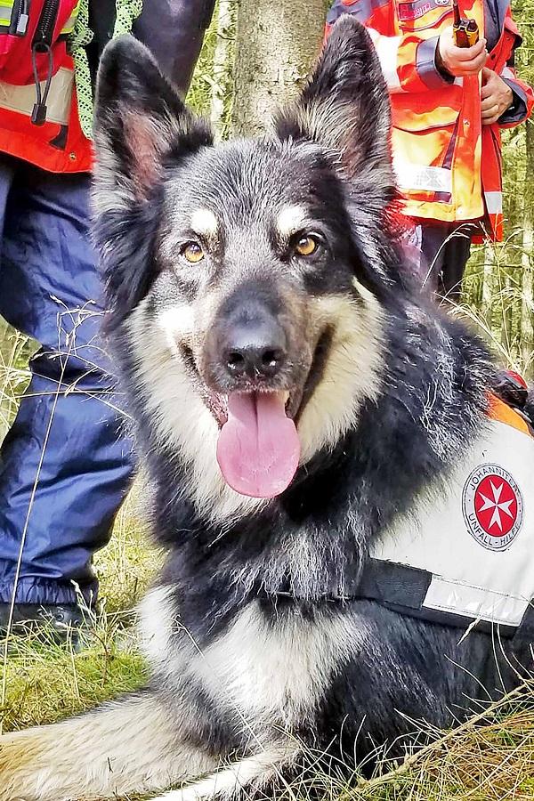 Spürhund der Johanniter Rettungshundestaffel Schleswig