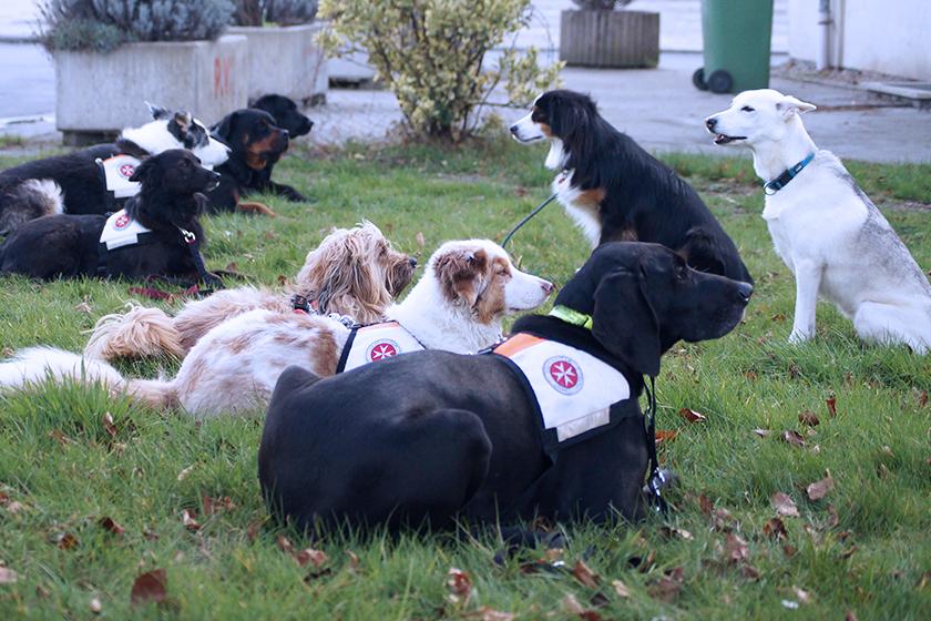 Rettungshunde der Johanniter in Bonn/Rhein-Sieg/Euskirchen