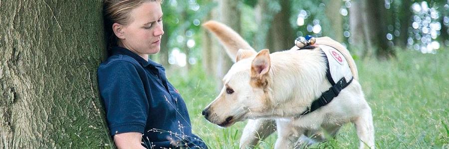 Übung macht den Meister - Rettungshund Sam findet die vermisste Person im Wald.