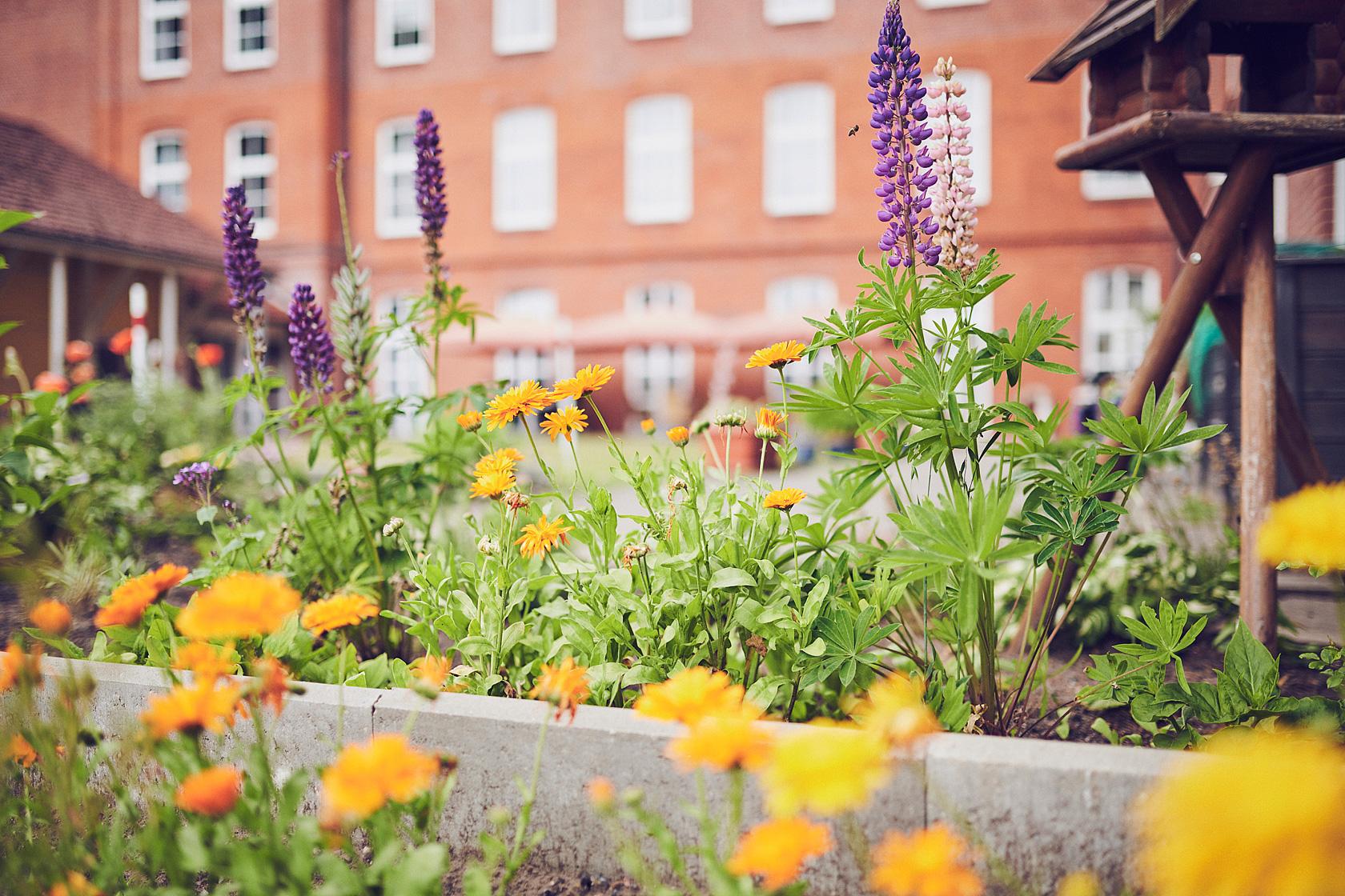 Blumenbeet mit der Seniorenresidenz im Hintergrund der Seniorenresidenz Lindenpark