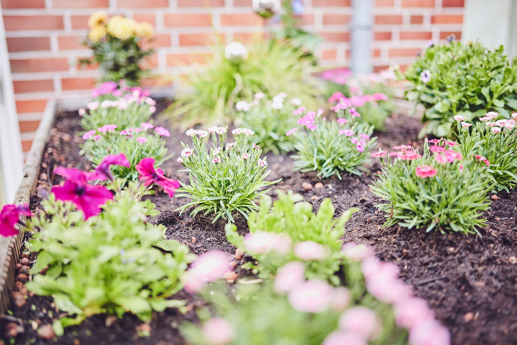 ein frisch gepflanztes buntes Blumenbeet im Johanniter-Haus Hörde