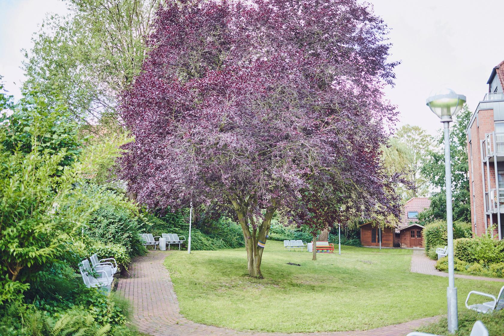 Großer Baum im Garten des Johanniter-Stift Dortmund