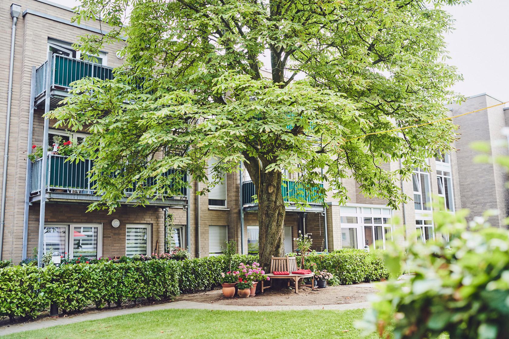 Gartenbank unter einem großen Baum in der Anlage Johanniter-Stift Flittard.