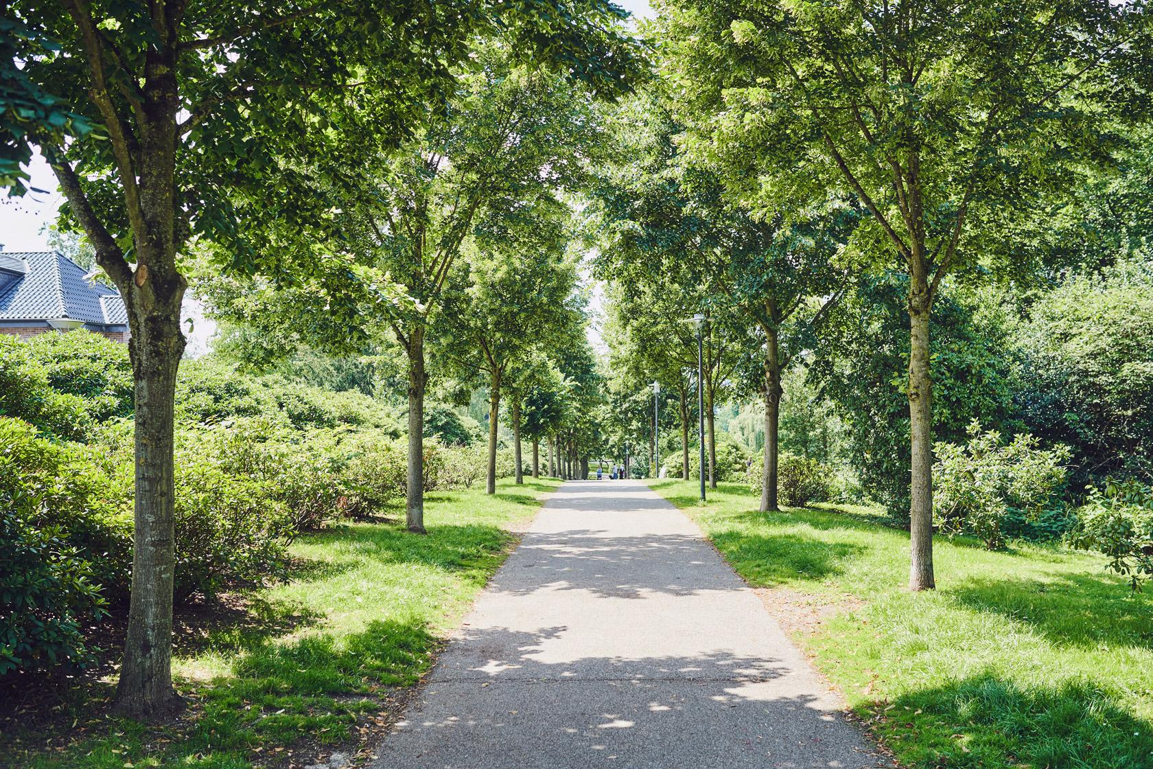 Weg mit seitlich angelegten Grünflächen