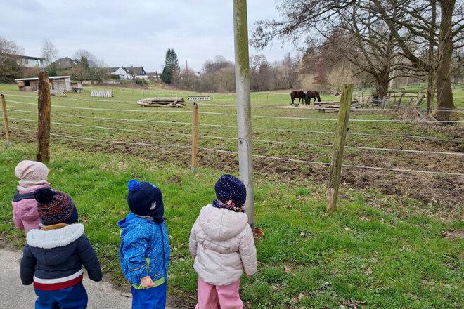 Kita-Kinder stehen am Weidezaun und beobachten die schwarzen Pferde beim Grasen.