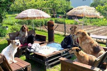 Sechs Hunde sitzen beisammen