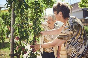 Bewohnerin pflückt Obst