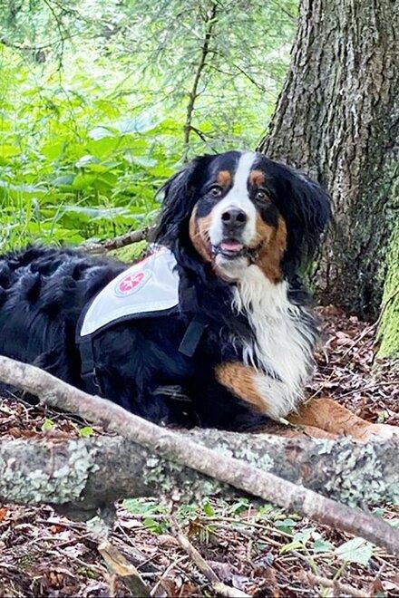 Rettungshund Kira