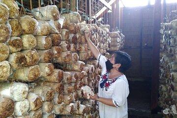 Die Präsidentin mit Mundschutz neben gestapelten Tüten voller Pilze
