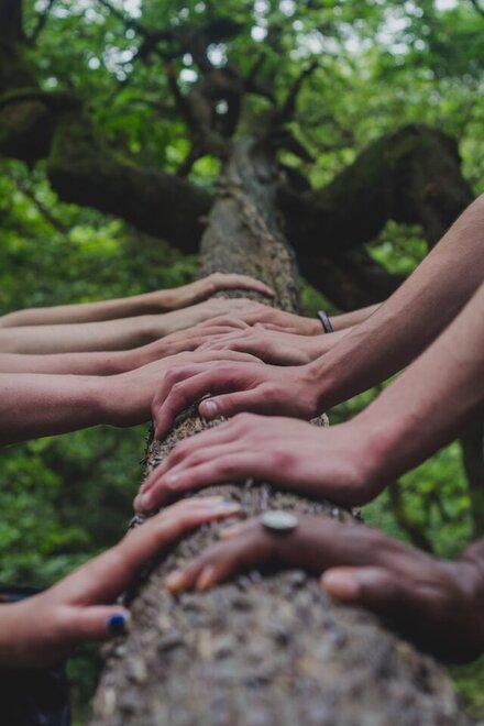 Mehrere Hände fassen an einen Baumstamm