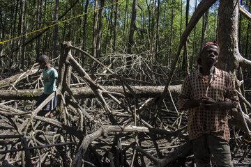 Ein Mann und ein Junge ziwschen Mangrovenbäumen