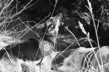 Ein Johanniter-Rettungshund bei einer Übung im Jahr 2000.