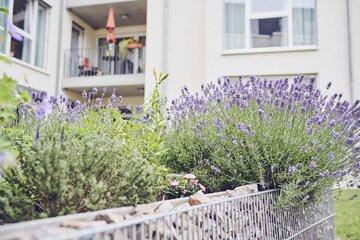 Hochbeete sind mit verschiedenen Blumen bepflanzt