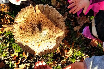Hände der Kinder des Waldkindergartens Schlüsselau rund um einen großen Pilz.