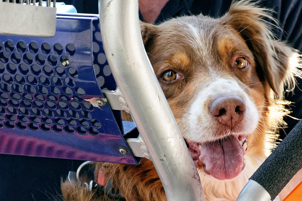 Rettungshund in einem Korb einer Drehleiter
