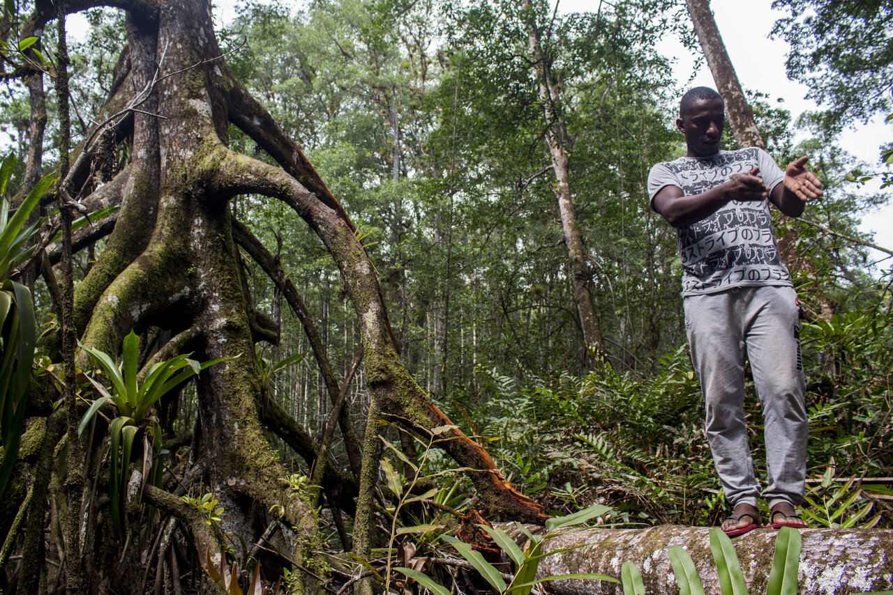 A man standing on a root of a mangrove