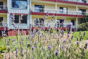 Lavendel im Garten des Johanniterheimes Velbert
