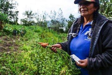 Esther auf einem Feld mit einer Karotte in der Hand