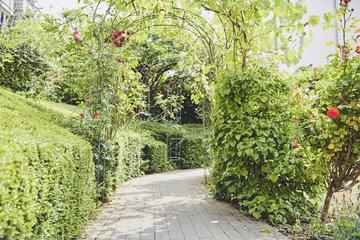 Ein Weg mit Spalier Rosenbogen im Garten des Johanniter-Hauses Köln Zollstock.