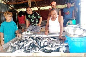 Ein Verkaufsstand mit vielen Fischen