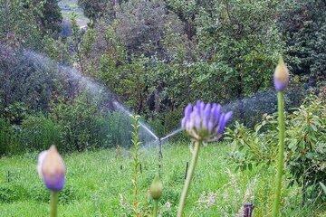 Sprenkleranlage inmitten von grünen und blühenden Pflanzen