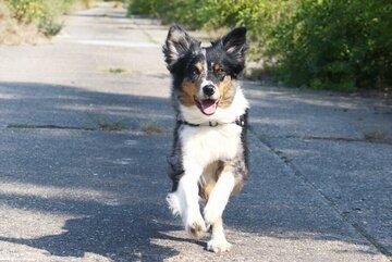 Oft dauert es zwischen zwei und drei Jahren, bis ein Rettungshund mit seinem Halter oder seiner Halterin an einem Einsatz bei der Johanniter-Rettungshundestaffel teilnehmen kann.