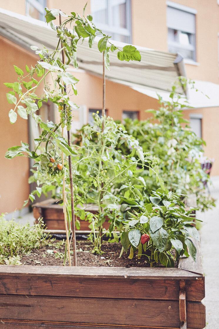 Bepflanzter großer Holzblumenkasten vor dem Johanniter-Haus Köln-Zollstock.