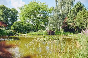 Der schöne Gartenteich gibt den Blick auf eine Baumgruppe frei