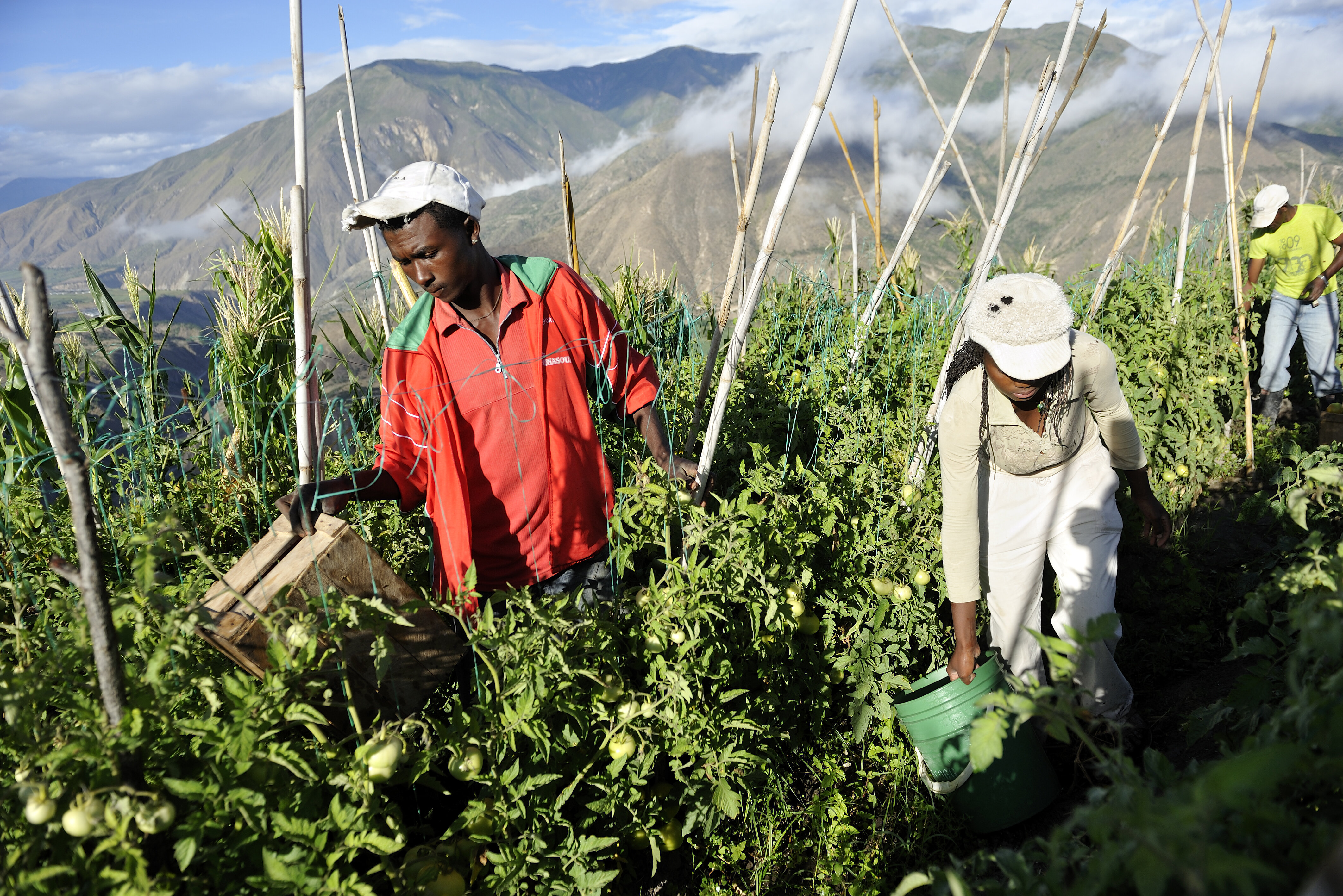 Ein Mann und eine Frau arbeiten auf ihrem Feld. Im Hintergrund sieht man die Berge der Anden.