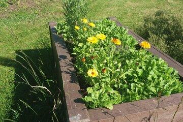 Hochbeet im Garten der Johanniter-Kinderinsel Reckendorf