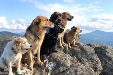 Auf dem Foto sind 6 Hunde zu sehen: Trejsi, Bernie, Neli, Wilma, Spencer Lotta (v.l.)